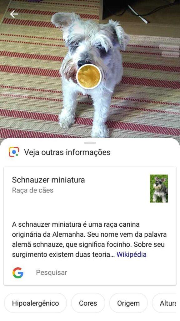 google lens aplicativo reconhece raça de cachorro pelo celular
