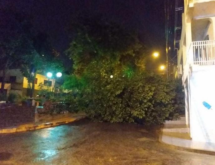 Árvore caída em Varginha